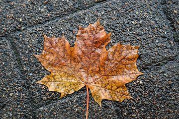 Farbenfrohe Herbstblätter auf dem Boden