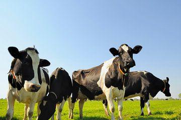 Herde Kühe auf der Wiese von Sjoerd van der Wal