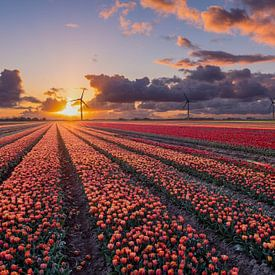 Sonnenuntergang über den Tulpenfeldern in Flevoland von Fotografie Ronald
