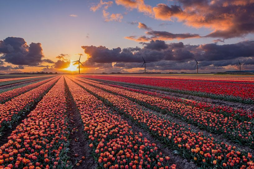 Zonsondergang boven de tulpenvelden in Flevoland van Fotografie Ronald