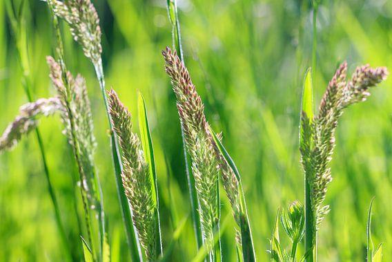 Grassprieten in de lente van Dennis van de Water