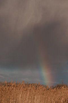 Regenbogen. Bedrohlicher Himmel. Schilfrohr. Landschaft. Kunstfotografie. von Quinten van Ooijen