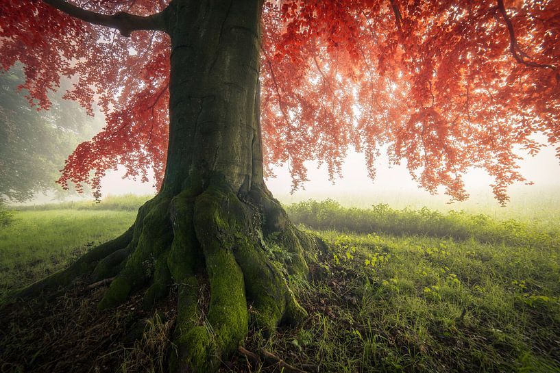 Autumn is coming van Edwin Mooijaart