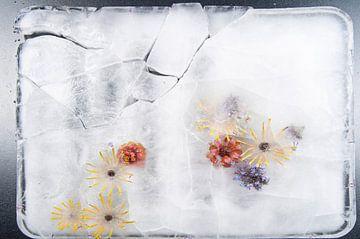 Frozen Summer II sur Guido Van den Troost