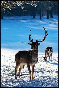 Herten in de winter op Het Loo, Apeldoorn van EFFEKTPHOTOGRAPHY.nl
