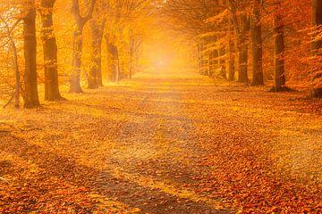 Een mistige herfstsfeer op een mooie november dag in de bossen bij Gieten in Drenthe. De zon geeft d van Bas Meelker