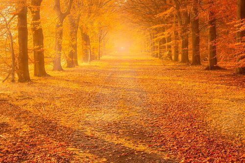 Een mistige herfstsfeer op een mooie november dag in de bossen bij Gieten in Drenthe. De zon geeft d