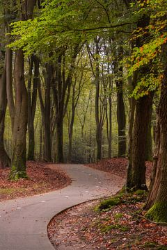 Fietspad door het Speulderbos in de herfst van Anges van der Logt