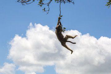Hangende aapje von Marijke Arends-Meiring