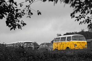 Kevers tijdens de Keverdag in Simpelveld
