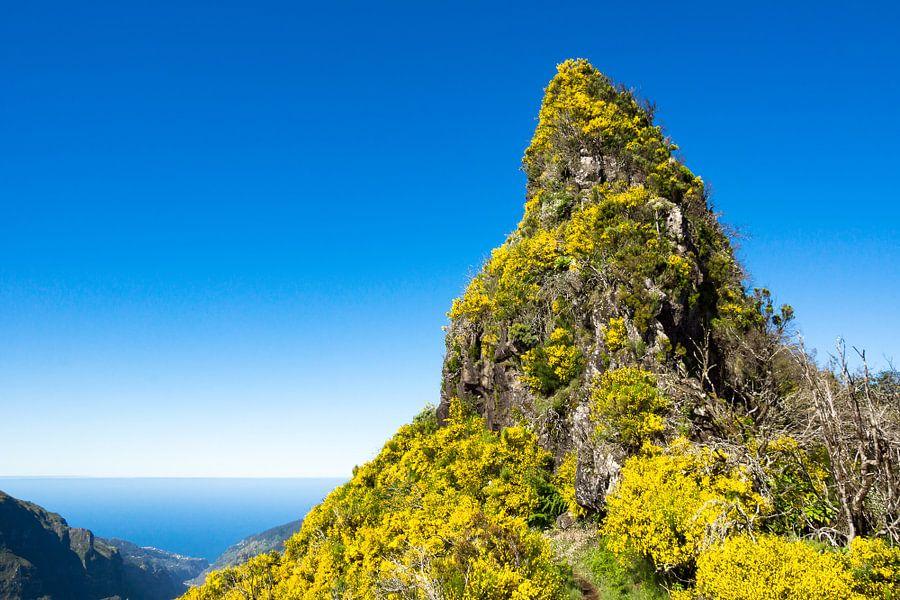 Bergtop bedekt met gele bloemen