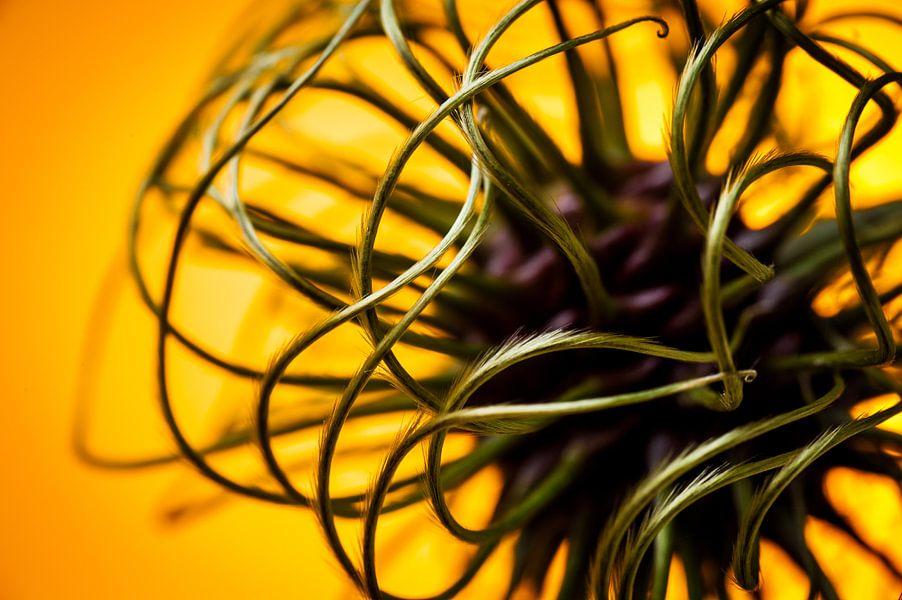 Abstract beeld van een bloem knop van een clematis / klimplant