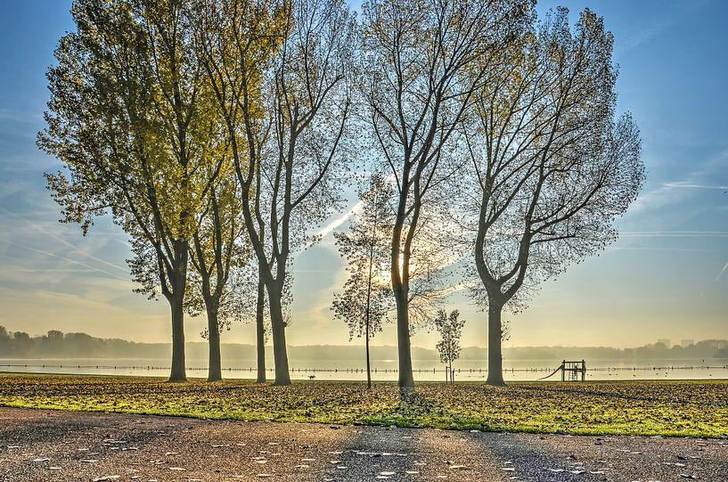 Bomen langs de Kralingse Plas van Frans Blok