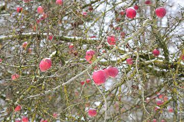 Pommes d'hiver sur Ulrike Leone