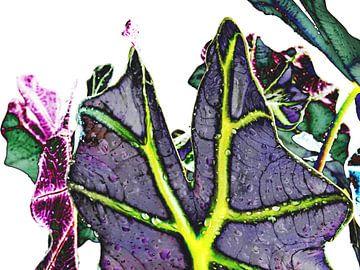 Kamerplant: Alocasia Zebrina | Olifantsoor 5 van MoArt (Maurice Heuts)