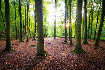Herfst in het bos van Martin Wasilewski