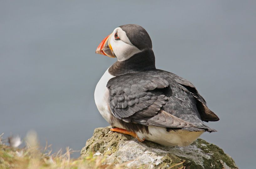 """[impressions of scotland] - puffin """"watching"""" sur Meleah Fotografie"""