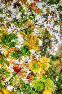 Kleurrijke boombladeren