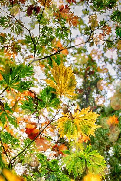 Kleurrijke boombladeren van Hille Bouma