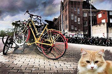 Amsterdam kat van MD JO