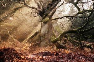Faun Forest II