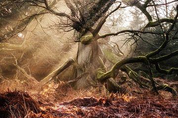 Wald der Faune Nr. 2 von Lars van de Goor