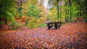 Het Speulder- en Sprielderbos in de herfst