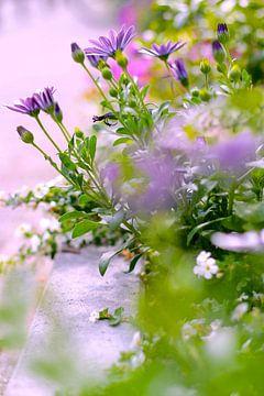 Sommerblumen in der Stadt von Marianna Pobedimova