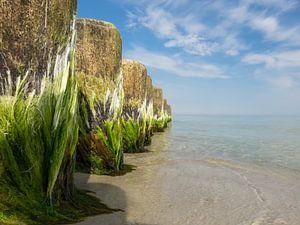 Buhnen an der Ostseeküste