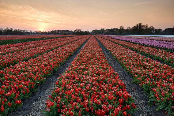 Hollands Welvaren