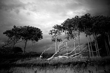 Met de wind mee van Sonja Pixels