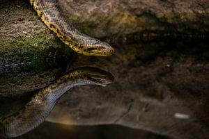 slang met reflectie