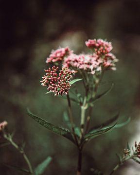 Rötliche Blumen Nahaufnahme von domiphotography