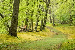 Lente in het bos van