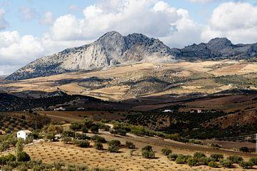 Spanje Andalusie met zijn bergen en olijfbomen van Marianne van der Zee