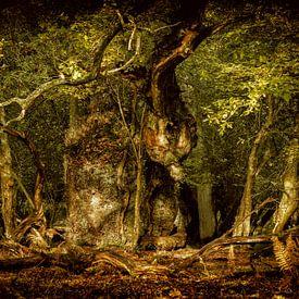 The Gritnam Oak van Lars van de Goor
