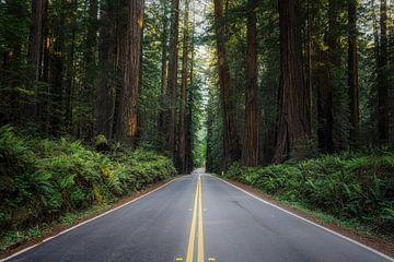 Avenue of the Giants van Joris Pannemans - Loris Photography