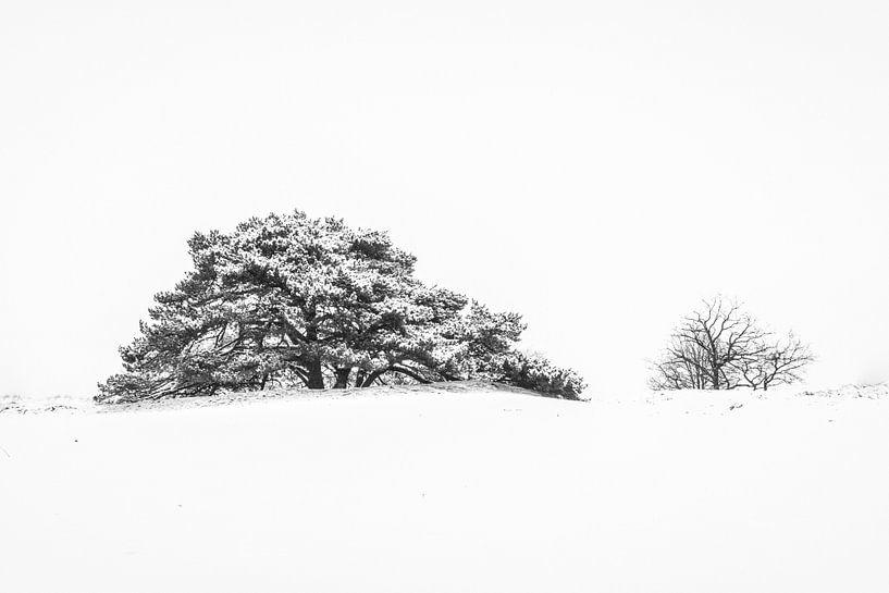 Sneeuwlandschap van Martzen Fotografie