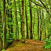 Forest in Spring van Gisela Scheffbuch thumbnail