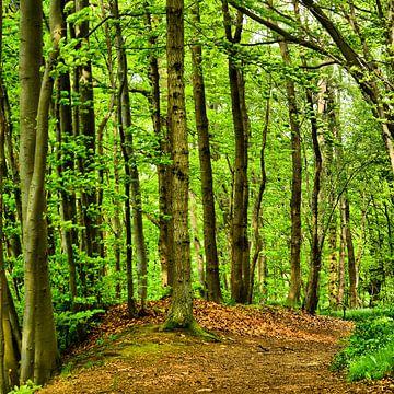 Forest in Spring sur