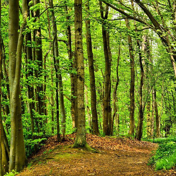 Forest in Spring van Gisela Scheffbuch