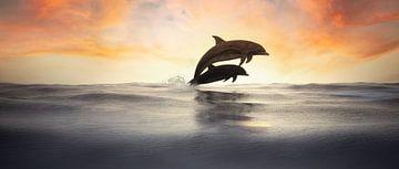 Springende Dolfijnen in silhouet