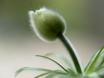Zachte wilde bloem