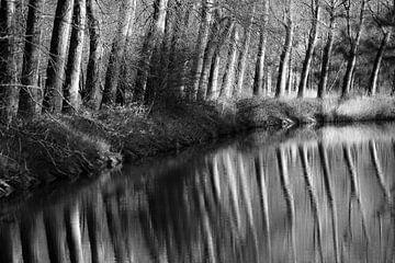 Bäume entlang des Kanals von Rik Verslype