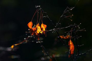 Herfst von Alice Berkien-van Mil