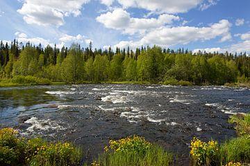Finse rivier in de zomer. van Ron van Elst