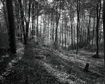 Tecklenburger Wald von Jurrian Tanke