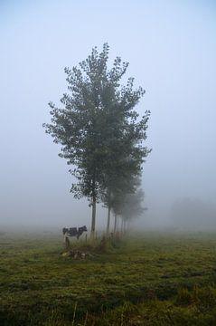 Milky fog von Leinsview C