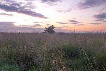 zonsopkomst wolken boom van FHoo