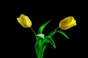 Tulpen van Thomas Jäger